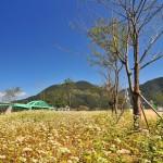 Grassland by the island 1